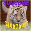 suncomezgc