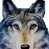 俺是草原狼